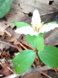 A Northern Alabama Update - Nature-Inspired - Steve Jones Great Blue