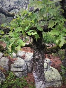 Oak Mountain SP