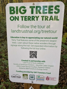 Terry Big Tree Trail