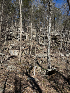 Opening Hike, Scrub along Ledge