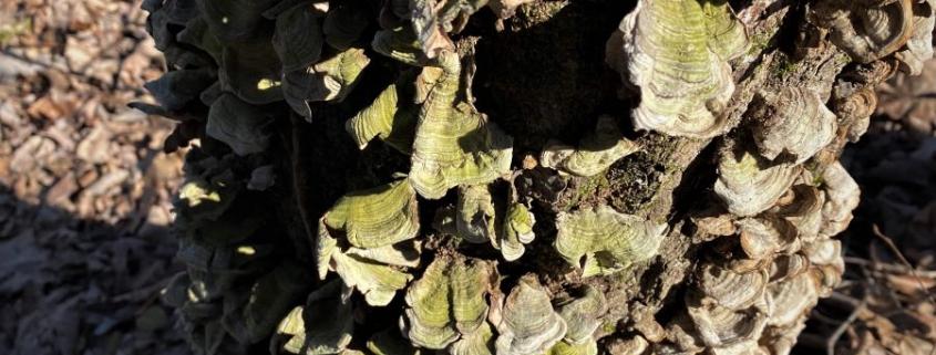 Mushroom Hike